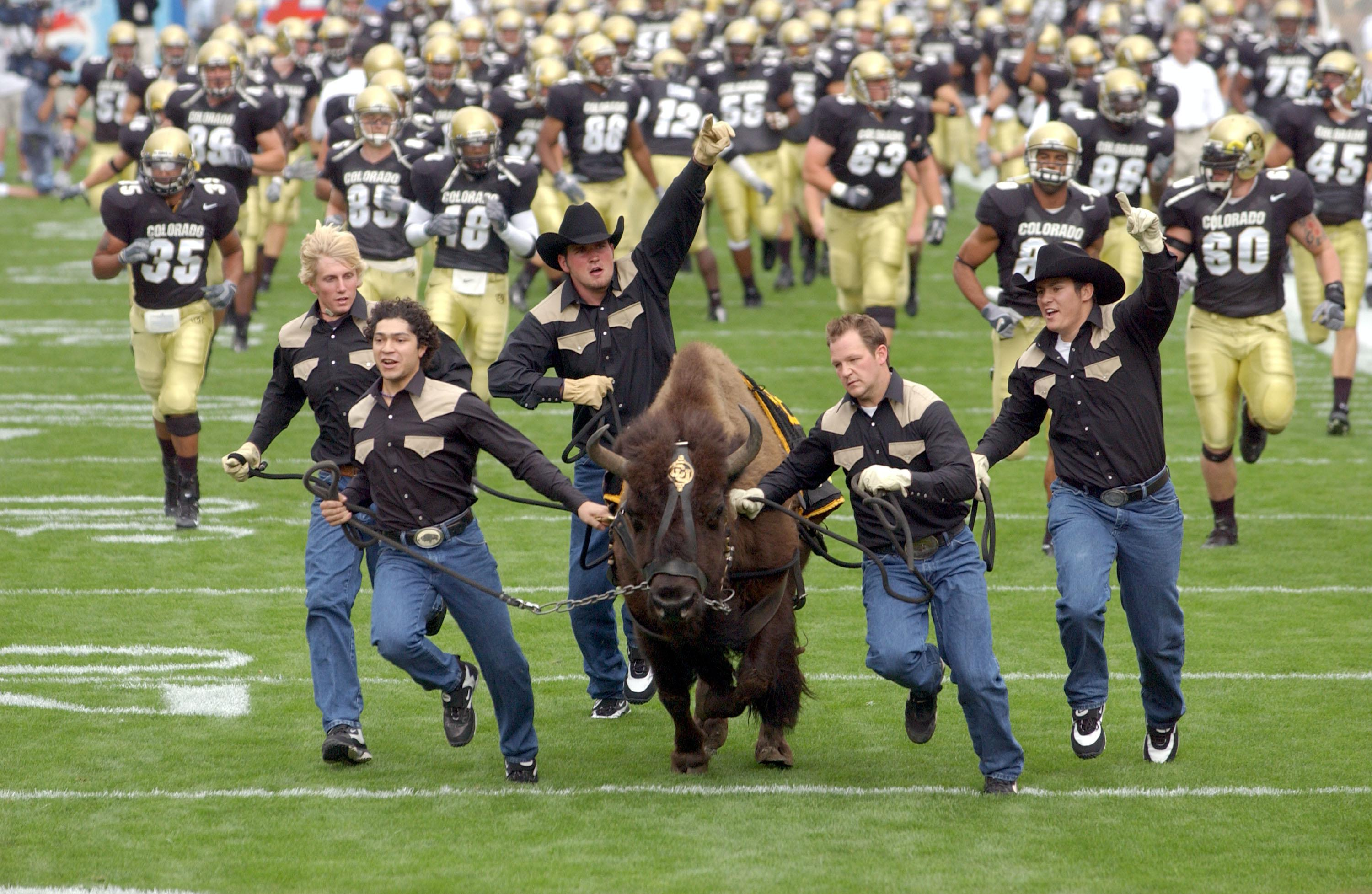 Image result for University of Colorado mascot, images
